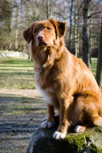Hunden - kopia (2)